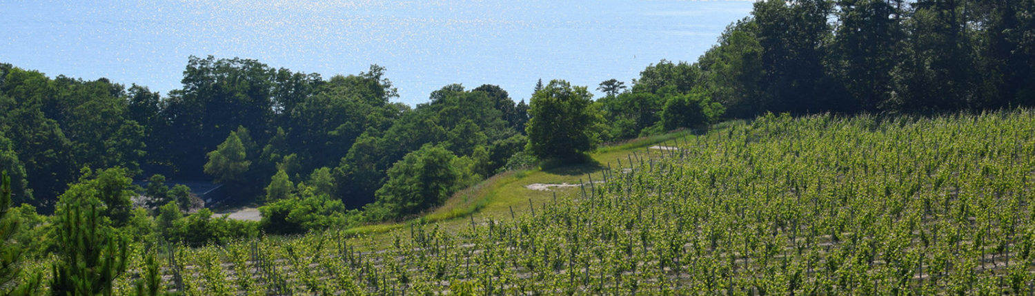 Where to Find Our Wines - Black Star Farms