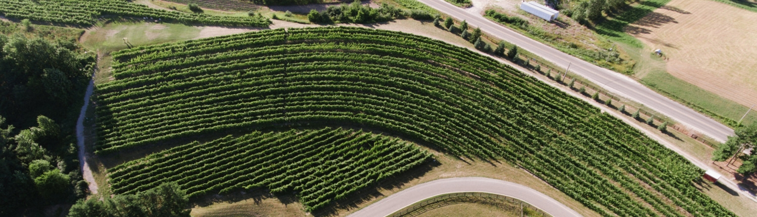 Aerial view of the vineyard at Black Star Farms Winery Estate in Suttons Bay.