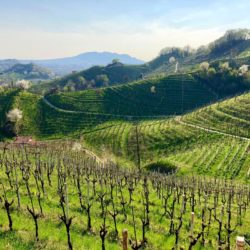 Gorgeous rolling hills of Miotto vineyards in Prosecco Country, Italy.
