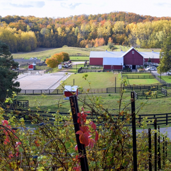 View from our vineyard of the stables at Black Star Farms Suttons Bay during fall with grapevines.