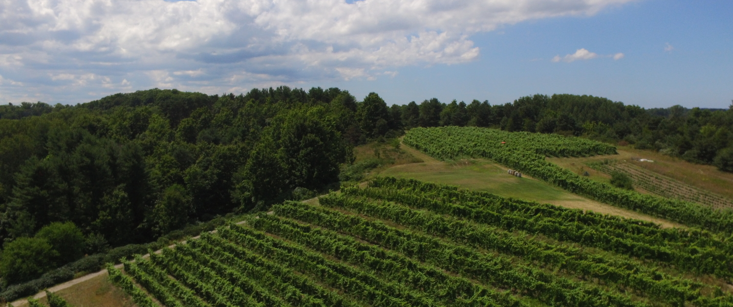 Aerial view of the vineyard at Black Star Farms Suttons Bay.