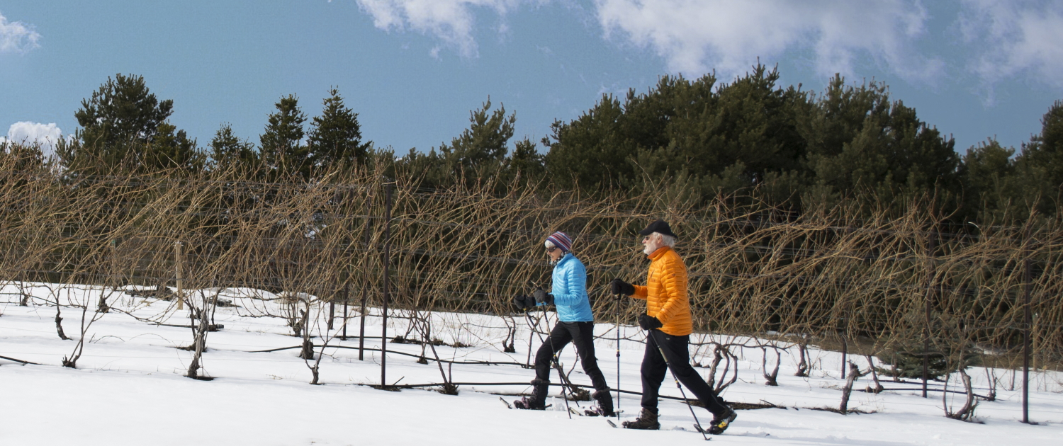 Man and woman snowshoeing through the vineyard at Black Star Farms Suttons Bay.