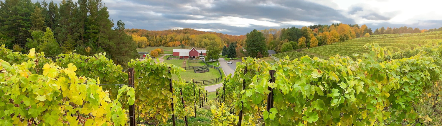 Fall farm view from Black Star Farms Suttons Bay vineyard