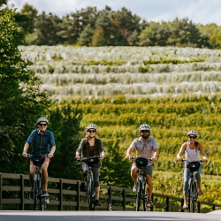 Two couples biking by the vineyard at Black Star farms Suttons Bay.
