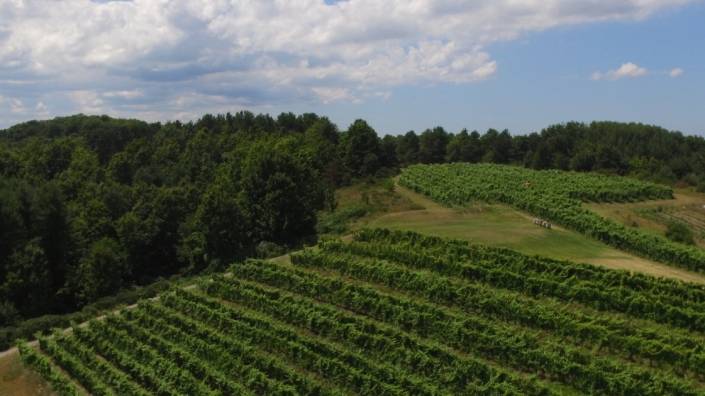 Aerial view of our Suttons Bay Vineyard.